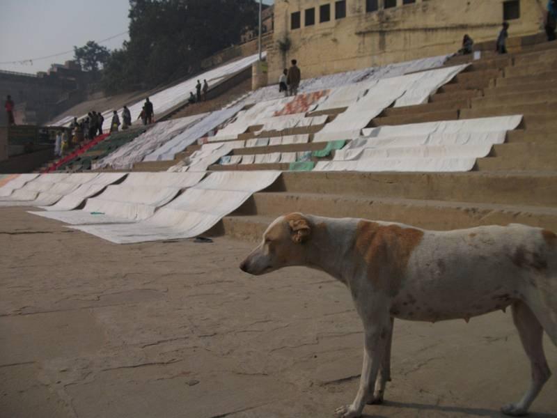 インドで野犬に噛まれたらどうする? 実体験に基づく対処法とは